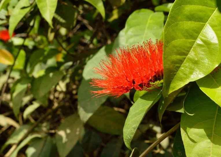 Baganara Island flowers6
