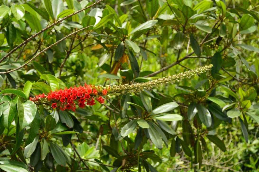 Baganara Island flowers8