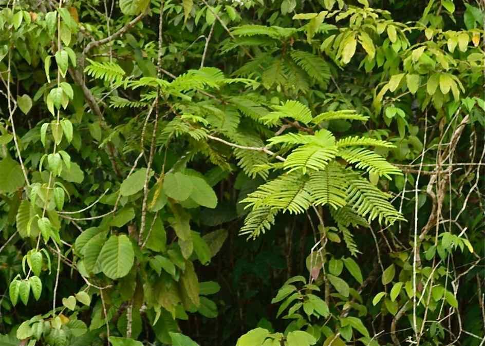 Baganara Island jungle04