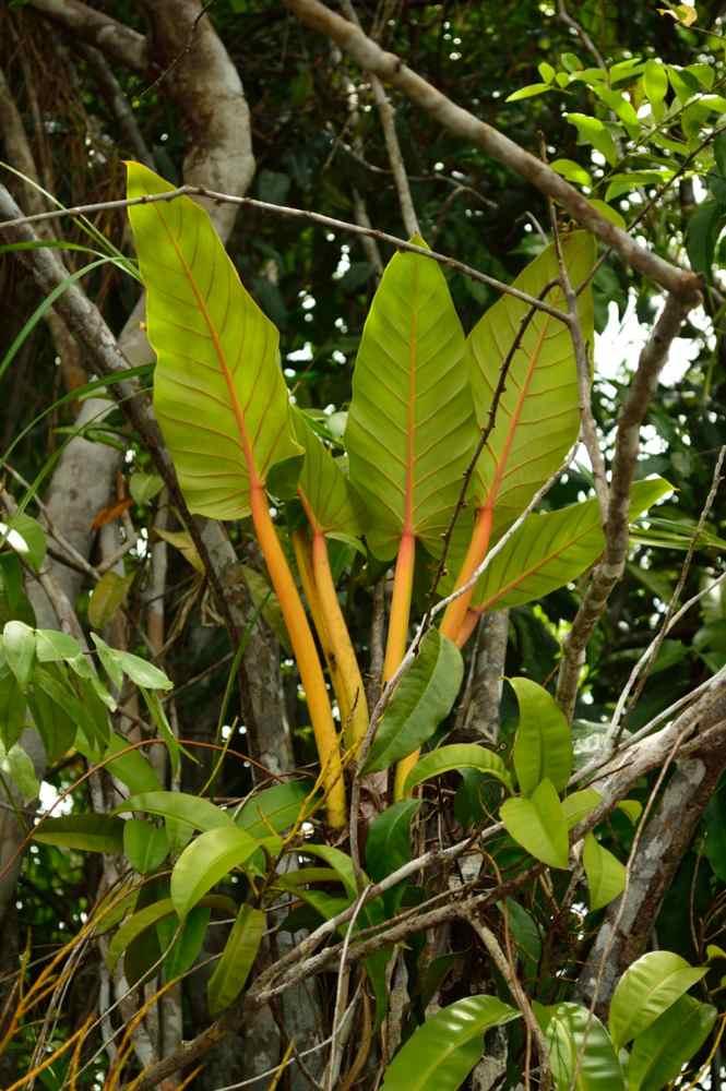 Baganara Island jungle08
