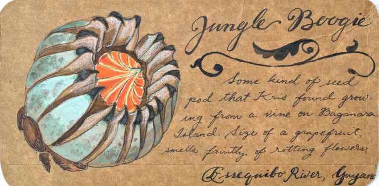 jungle boogie postcard