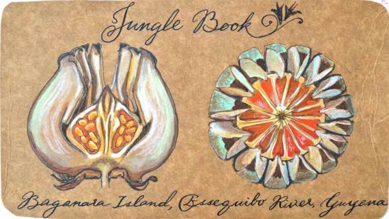 jungle book postcard